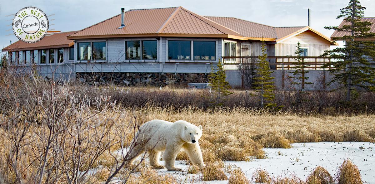 ecolodge polar environment glaciers